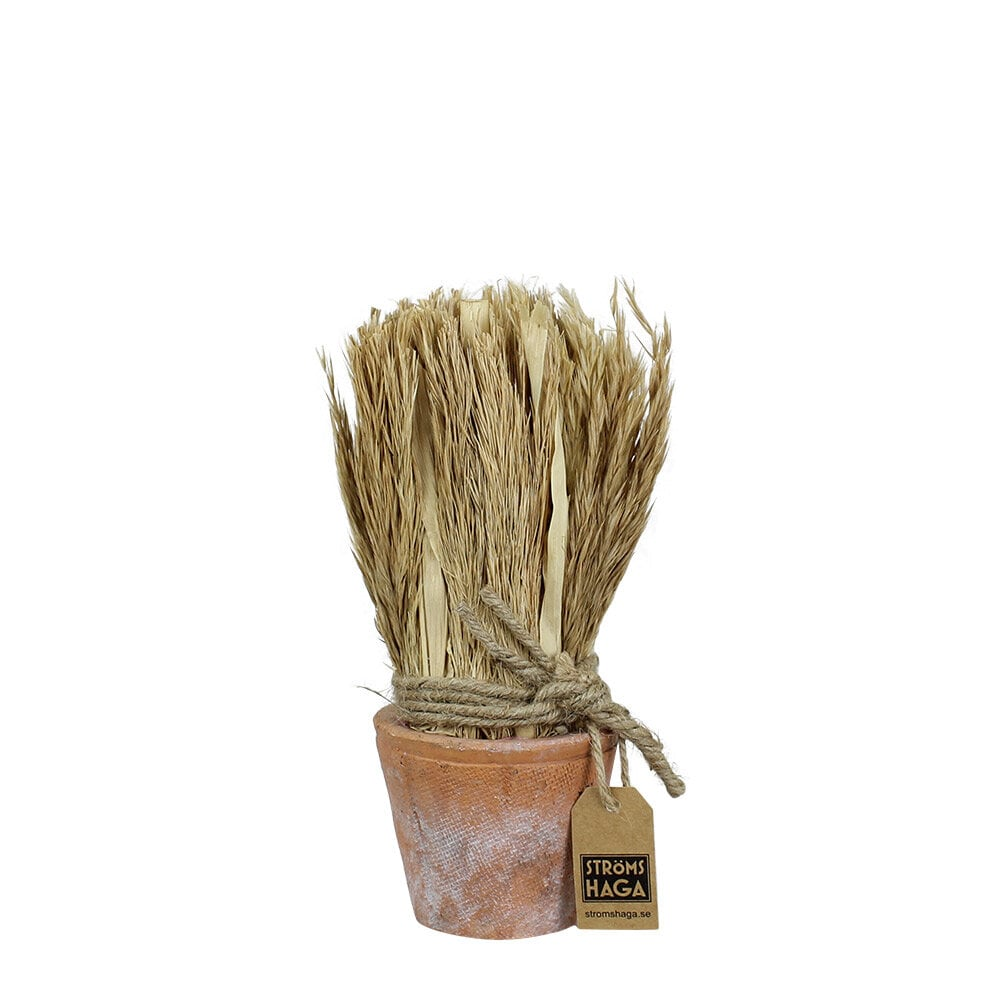 Harvest in Pot Reed Small