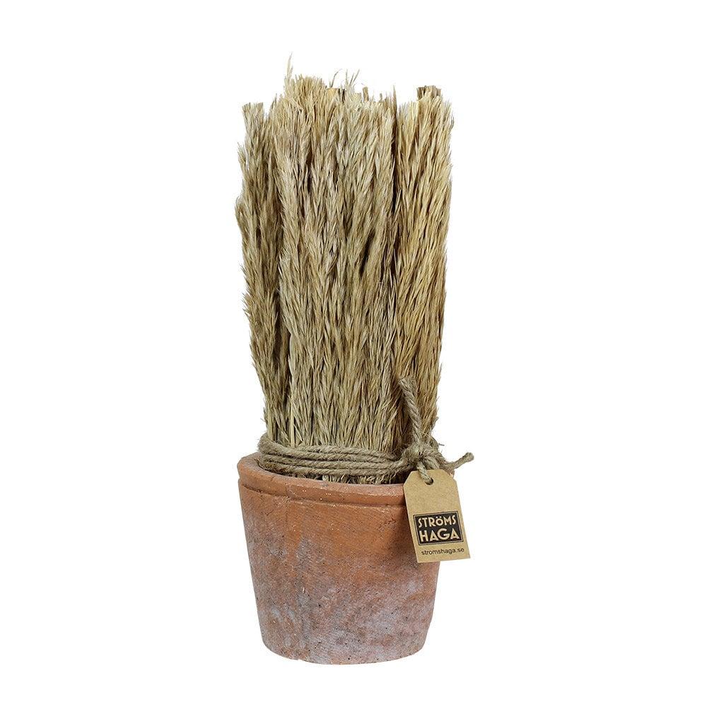 Harvest in Pot Reed Medium