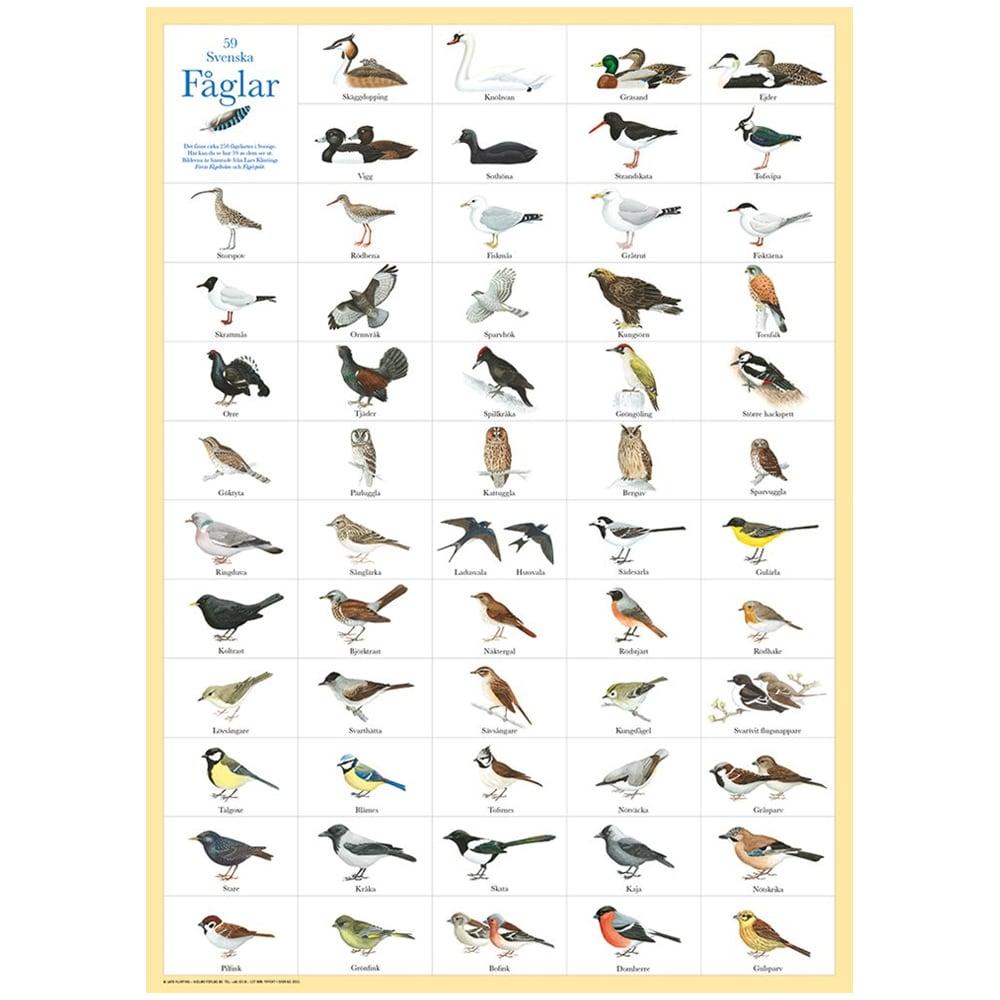Poster Swedish Birds