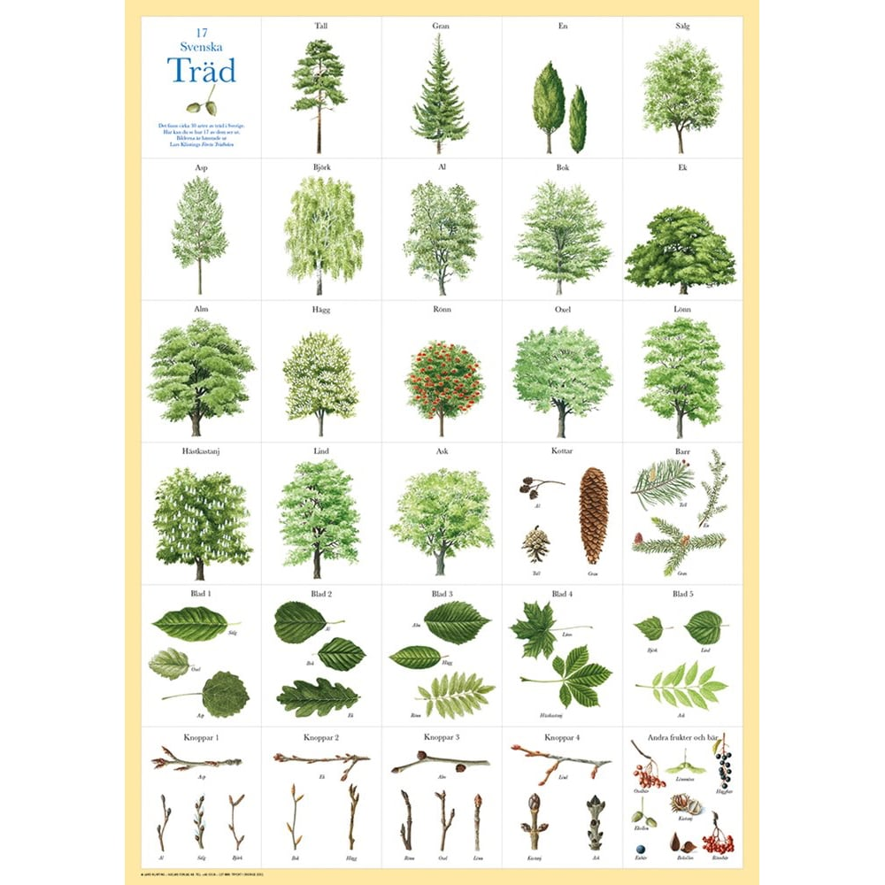 Poster Swedish Trees