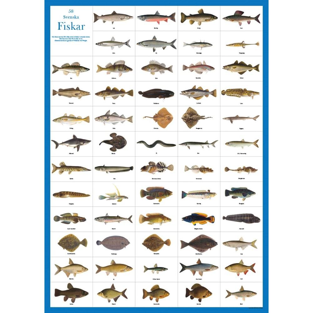 Poster Swedish Fish