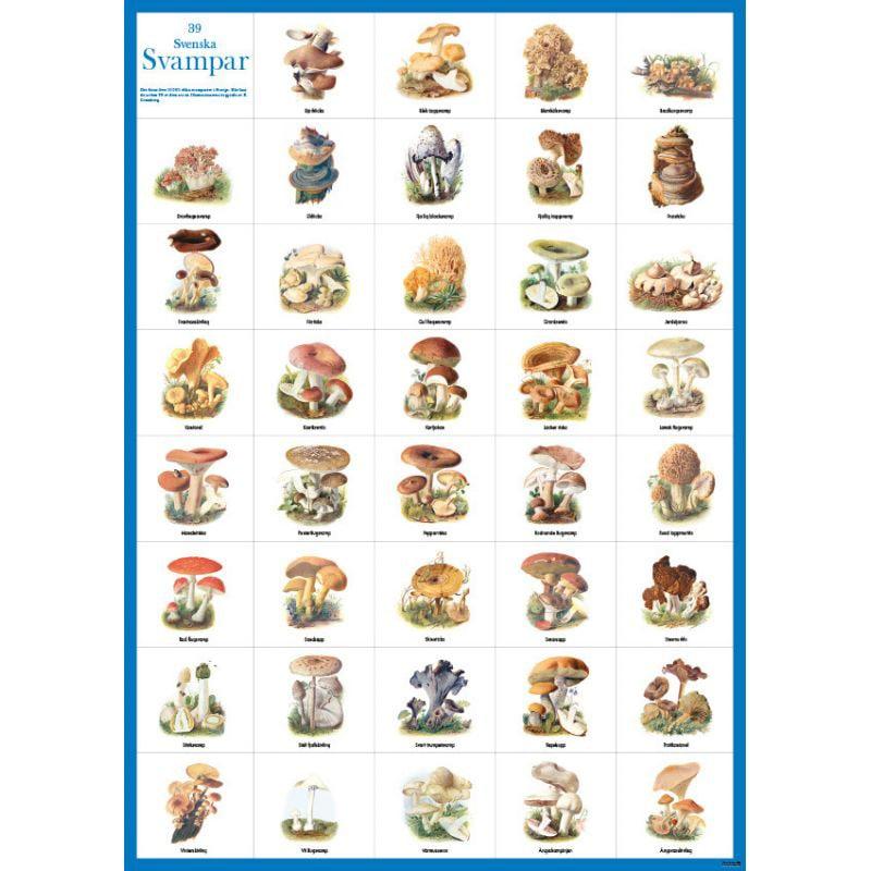 Poster Swedish Mushrooms